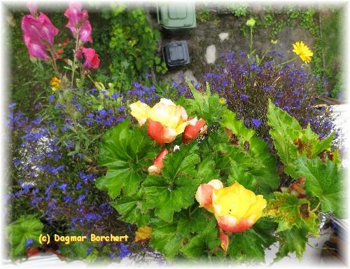 Mein Kleiner Schoener Garten Balkonpflanzen
