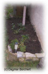 BALDUR-Garten Schnitt-Tulpen-Mischung 80 Zwiebeln